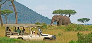Kenya safari dubai fam trip