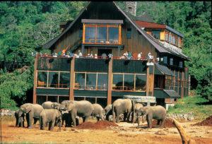 Kenya safari dubai